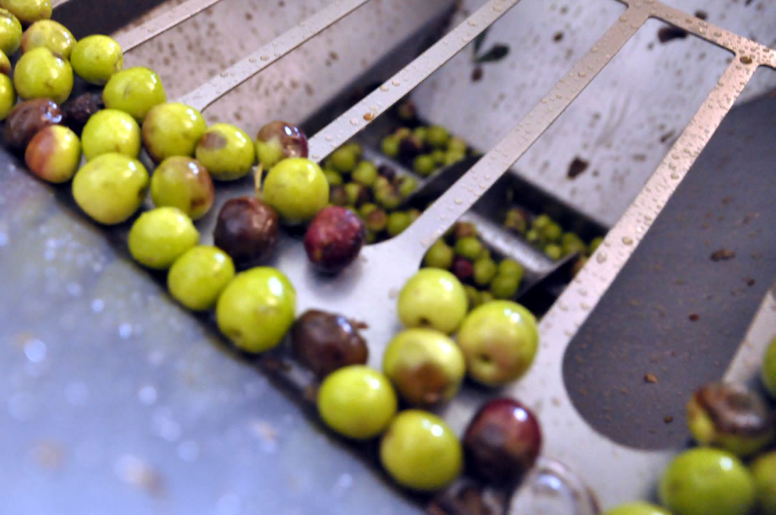 Olive crushing for oil