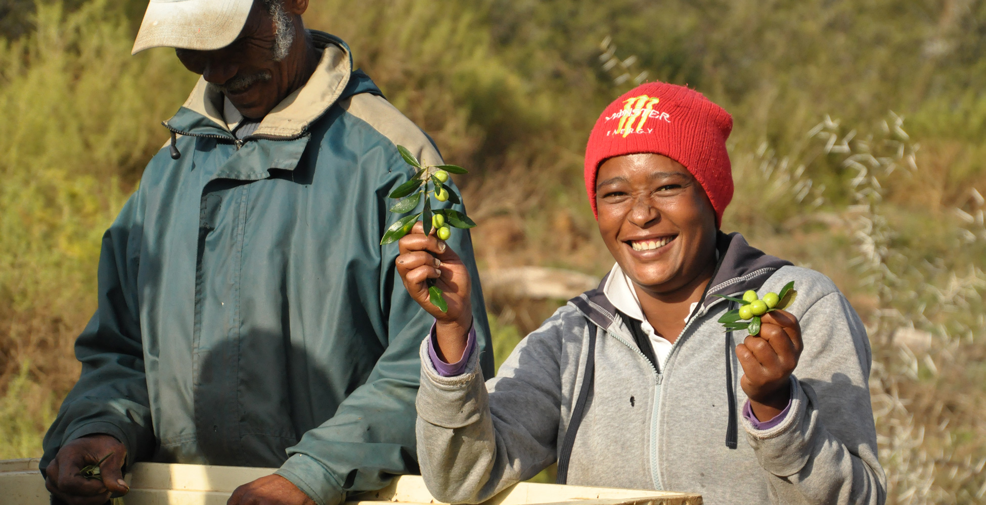 harvest dating south africa